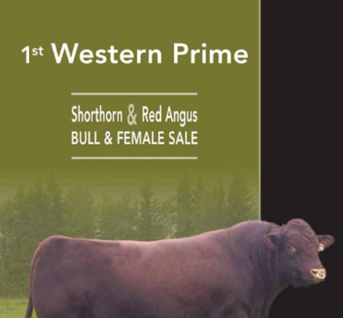 western-prime